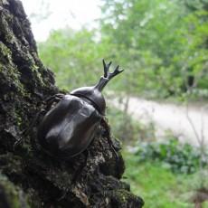 숲속 곤충나라~