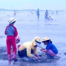 갯 모래 속에서 조개친구들  찾아요