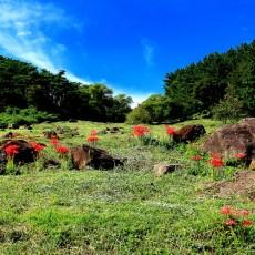 고창갯벌 100세 즐기기 - 운곡습지, 용계생태관광마을, 굴치농원