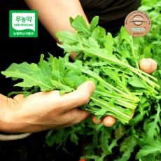 고창 무농약 루꼴라(와일드) 허브 생잎, 쌈채소